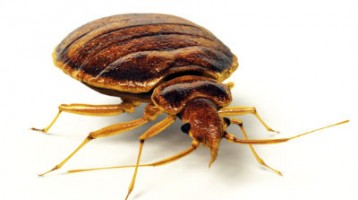 Commercial Pest Control Wirral and Chester