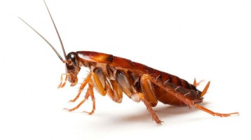 Industrial Pest Control Wirral and Chester